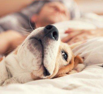 Doggyday®, Quelle: Solovyova/istockphoto