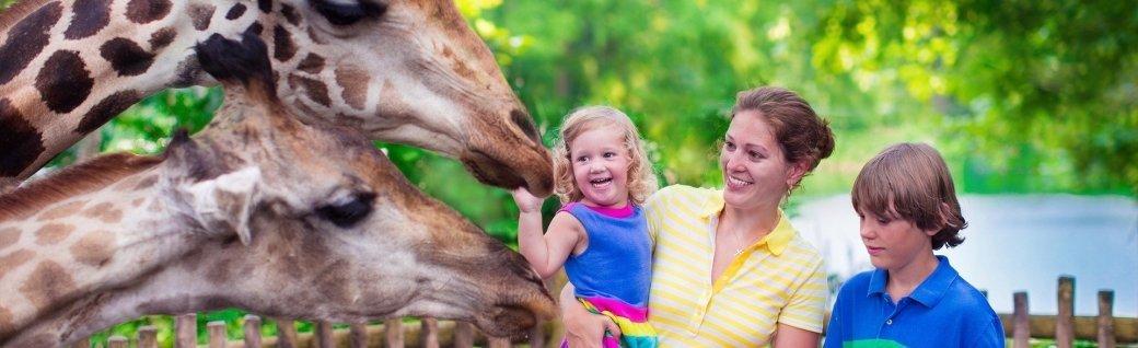 Familie, die Fütterung giraffe in einem zoo, Quelle: FamVeld/istockphoto