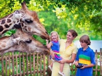 Familie, die Fütterung giraffe in einem zoo