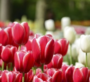 Kurzreisen im Frühling, Quelle: ©Rob3rt82/istockphoto