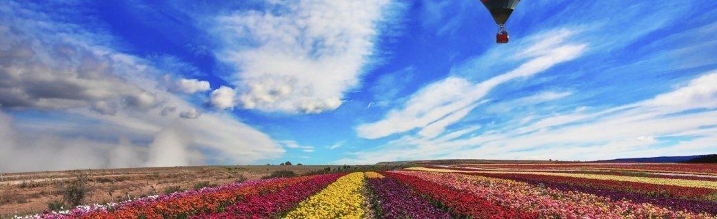 Die farbenfrohe Butterblume, Quelle: ©kavram/istockphoto