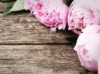 Blumenrahmen mit rosa Pfingstrosen