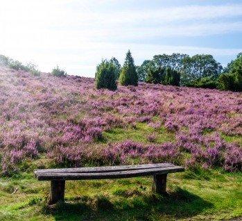Colbitz-Letzlinger Heide, Quelle: ©pictureimpressions/ istockphoto