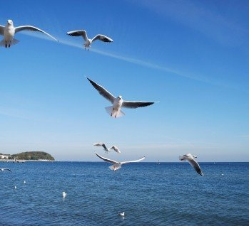 Hohwachter Bucht, Quelle: MichaWolf/istockphoto