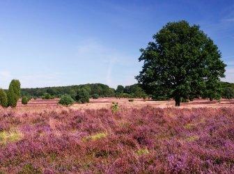 Panoramablick auf Lueneburg Heath