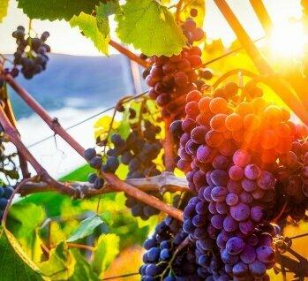 Mittelrhein , Quelle: LianeM/istockphoto