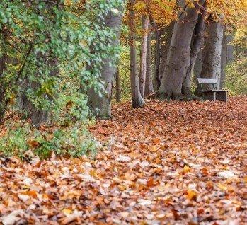 Naturpark Aukrug, Quelle: JGPhoto76/istockphoto