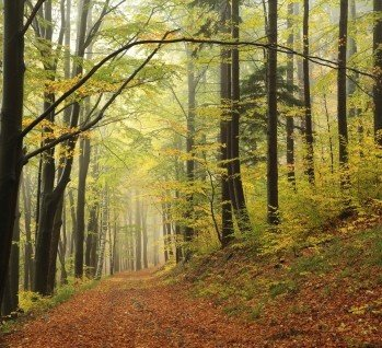 Naturpark Drömling, Quelle: aniszewski/istockphoto