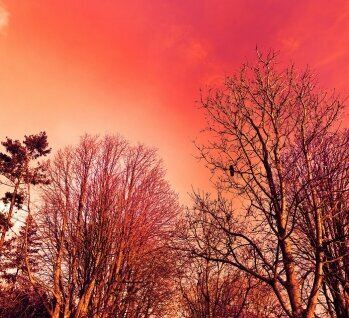 Naturpark Hoher Fläming, Quelle: © PytyCzech/ istockphoto