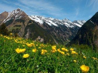 Blüte Wiese in den Alpen, Österreich Stockfoto