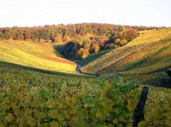 Herbstliches Weingut-Tal