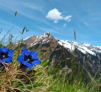 Österreich, Quelle: byPaul/istockphoto