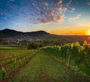 Pfalz, Quelle: fisfra/ istockphoto