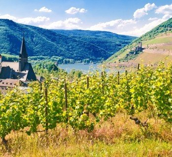Rheinhessen, Quelle: Mo-Jo-Lo/ istockphoto