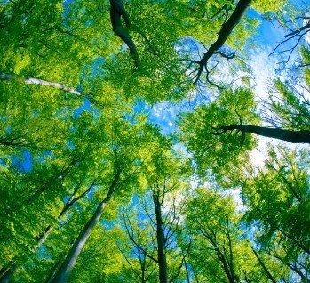 Schwäbischer Wald, Quelle: satori13/istockphoto