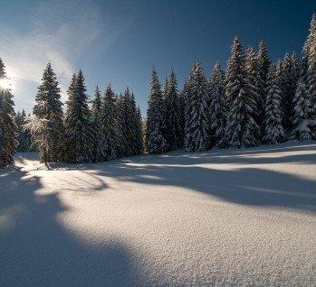 Schwarzwald, Quelle: danielschoenen / istockphoto