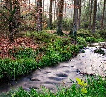 Teutoburger Wald, Quelle: ArtHdesign/ istockphoto