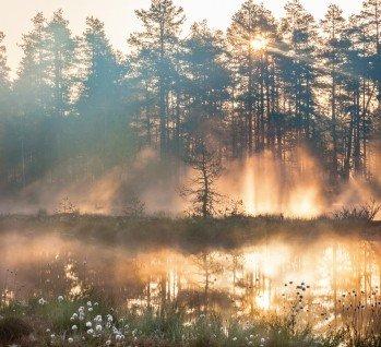 Tharandter Wald, Quelle: TT/istockphoto