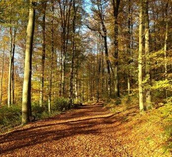 Westerwald, Quelle: Jchambers/ istockphoto