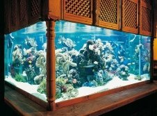 Aquarium in Spirit of India
