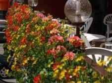 Blumen aud der Cafeterrasse