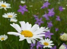 Blumenwiese im Leubengrund