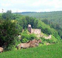 Burg Ruine Freienstein vor Ort, Quelle:
