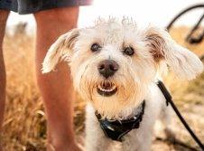 Hunde im Dampland willkommen