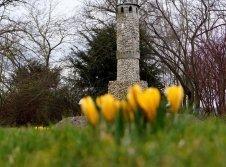 Kahlenbergturm im Garten