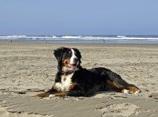 Mit dem Hund ans Meer