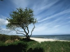 Ostseeküste v. VMO