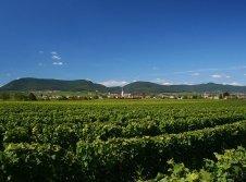 Pfalz Urlaub