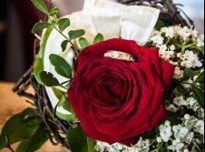 Romantische Rosentage
