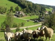 Schafswiesehotel