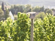 Weinberge in Perl