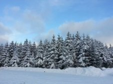 Wilde Wiese Skigebiet